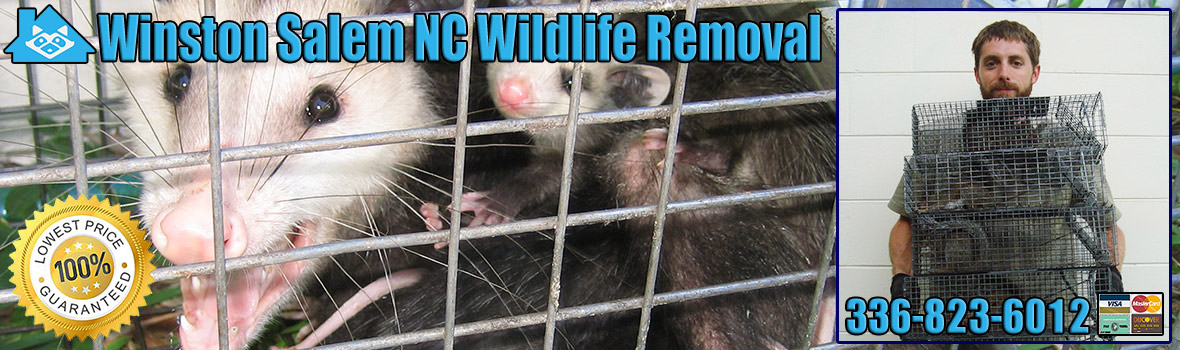 Winston Salem Wildlife and Animal Removal